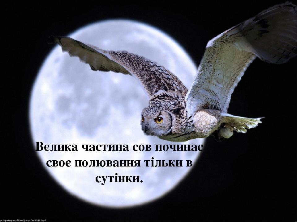 Велика частина сов починає своє полювання тільки в сутінки.