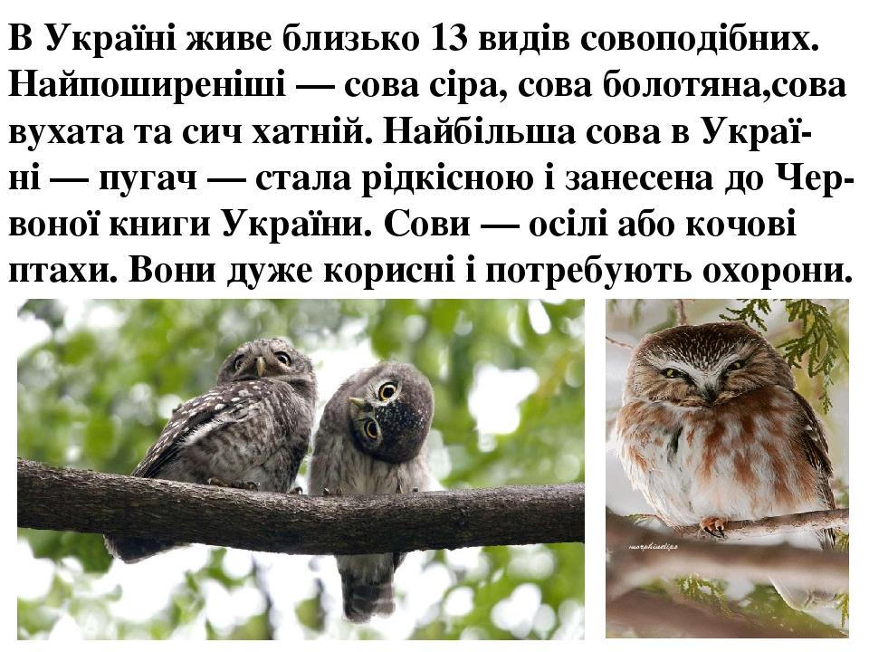 ВУкраїніживе близько 13 видів совоподібних. Найпоширеніші—сова сіра,сова болотяна,сова вухататасич хатній. Найбільша сова в Украї-ні—пугач...