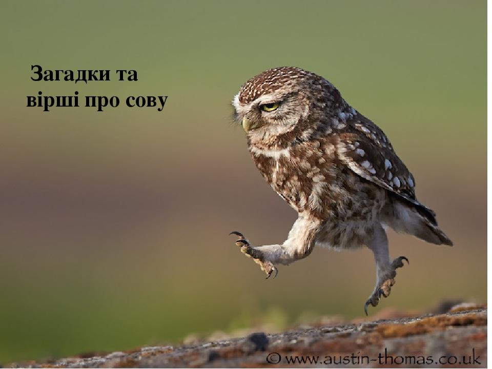 Загадки та вірші про сову