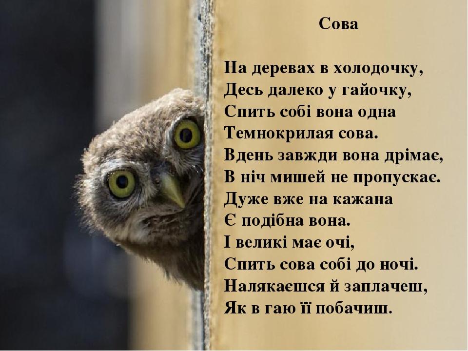 Сова На деревах в холодочку, Десь далеко у гайочку, Спить собі вона одна Темнокрилая сова. Вдень завжди вона дрімає, В ніч мишей не пропускає. Дуже...