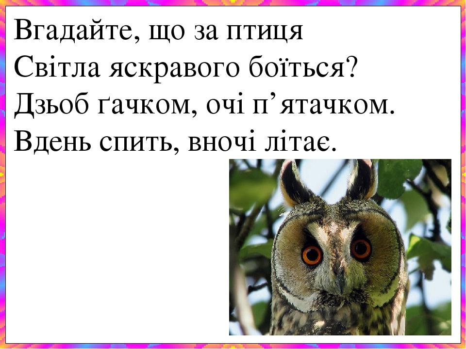 Вгадайте, що за птиця Світла яскравого боїться? Дзьоб ґачком, очі п'ятачком. Вдень спить, вночі літає.