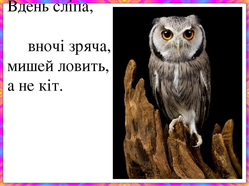 Вдень сліпа, вночі зряча, мишей ловить, а не кіт.