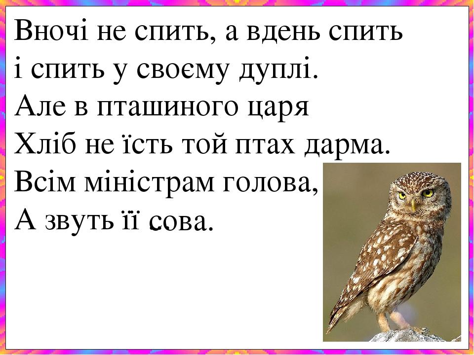 Вночі не спить, а вденьспить і спить у своєму дуплі. Але в пташиного царя Хліб не їсть той птах дарма. Всім міністрам голова, А звуть її ... с...