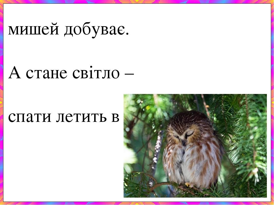 Всю ніч літає – мишей добуває. А стане світло – спати летить в дупло.