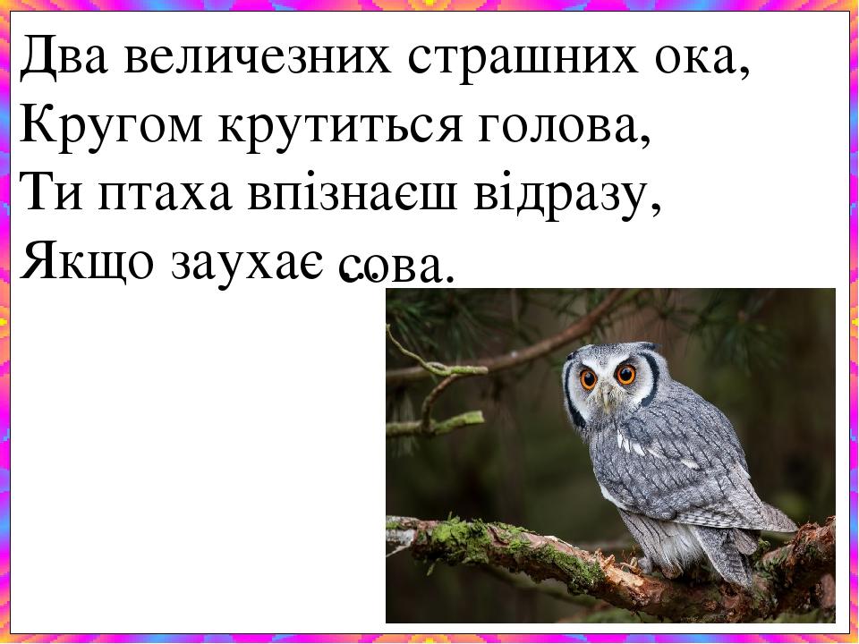 Два величезних страшних ока, Кругом крутиться голова, Ти птаха впізнаєш відразу, Якщо заухає ... сова.