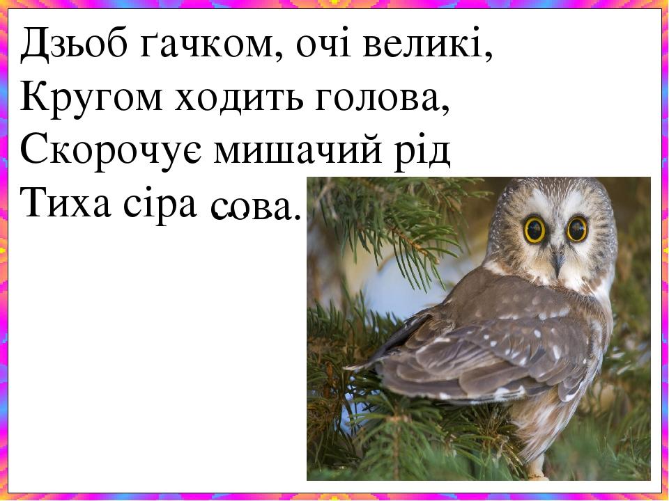 Дзьоб ґачком, очі великі, Кругом ходить голова, Скорочує мишачий рід Тиха сіра … . сова.