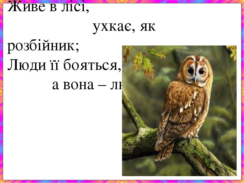 Живе в лісі, ухкає, як розбійник; Люди її бояться, а вона – людей.