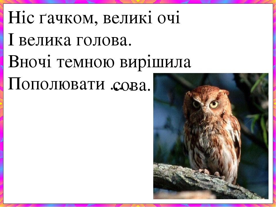 Ніс ґачком, великі очі І велика голова. Вночі темною вирішила Пополювати ... . сова.