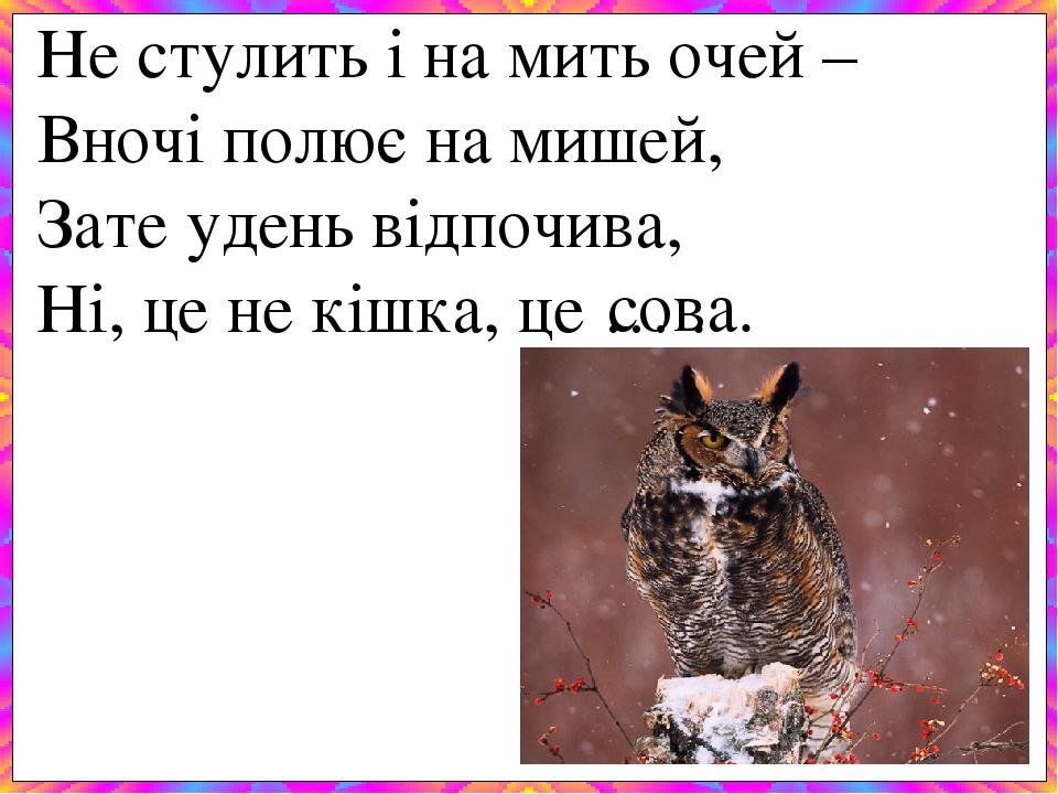 Не стулить і на мить очей – Вночі полює на мишей, Зате удень відпочива, Ні, це не кішка, це … . сова.