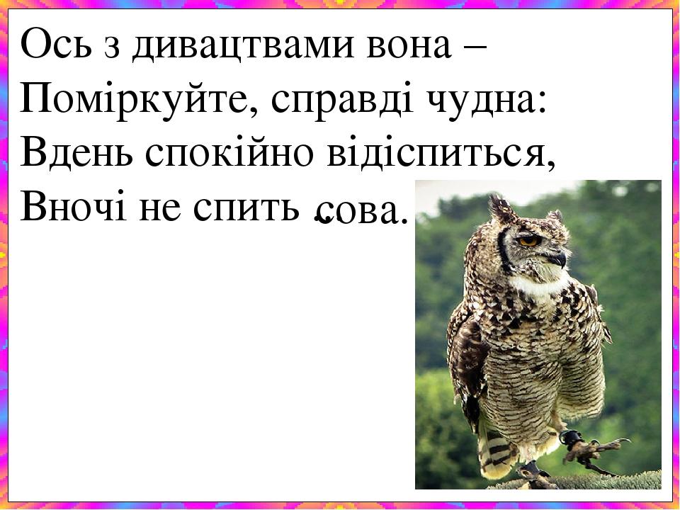 Ось з дивацтвами вона –  Поміркуйте, справді чудна: Вдень спокійно відіспиться, Вночі не спить ... сова.