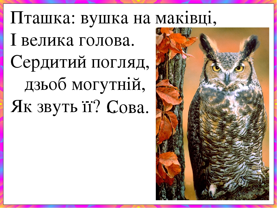 Пташка: вушка на маківці, І велика голова. Сердитий погляд, дзьоб могутній, Як звуть її? … . Сова.