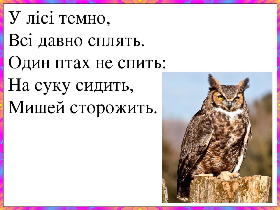 У лісі темно, Всі давно сплять. Один птах не спить: На суку сидить, Мишей сторожить.