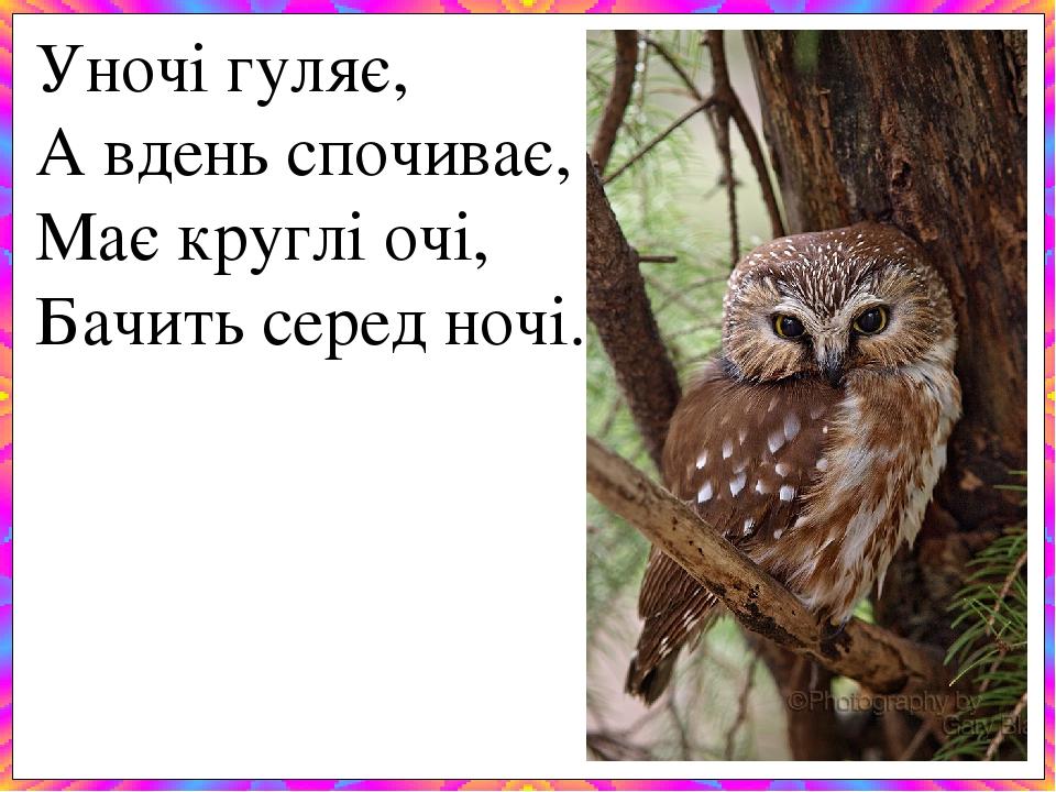 Уночі гуляє, А вдень спочиває, Має круглі очі, Бачить серед ночі.
