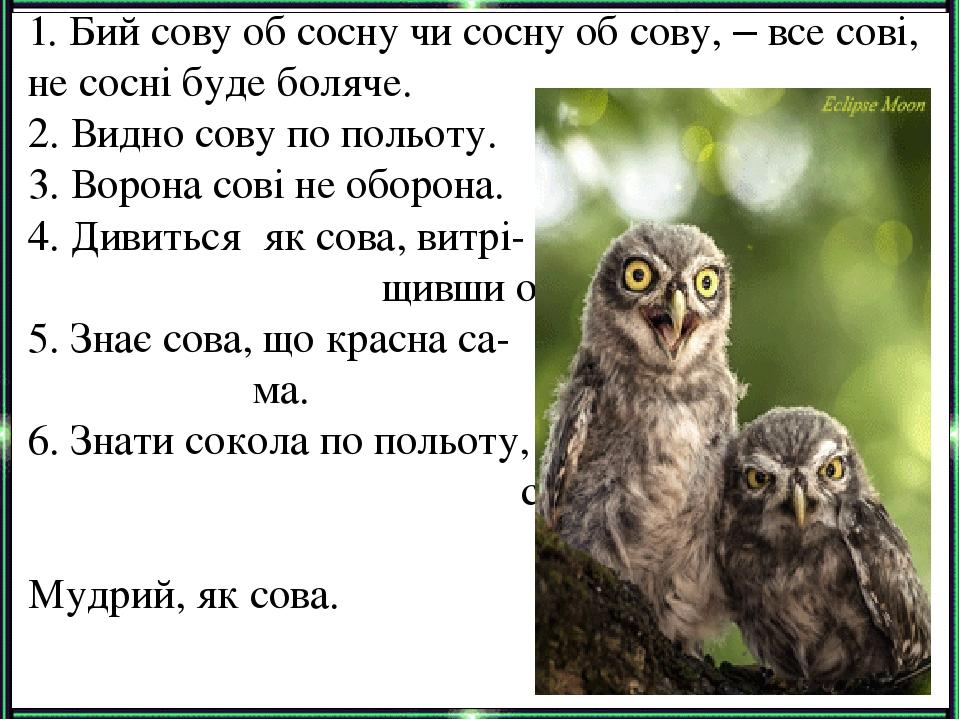 1. Бий сову об сосну чи сосну об сову, – все сові, не сосні буде боляче. 2. Видно сову по польоту. 3. Ворона сові не оборона. 4. Дивиться як сова, ...