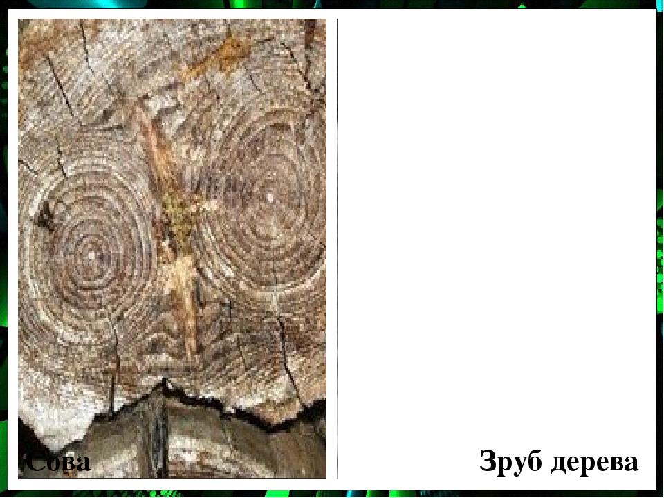 Сова Зруб дерева