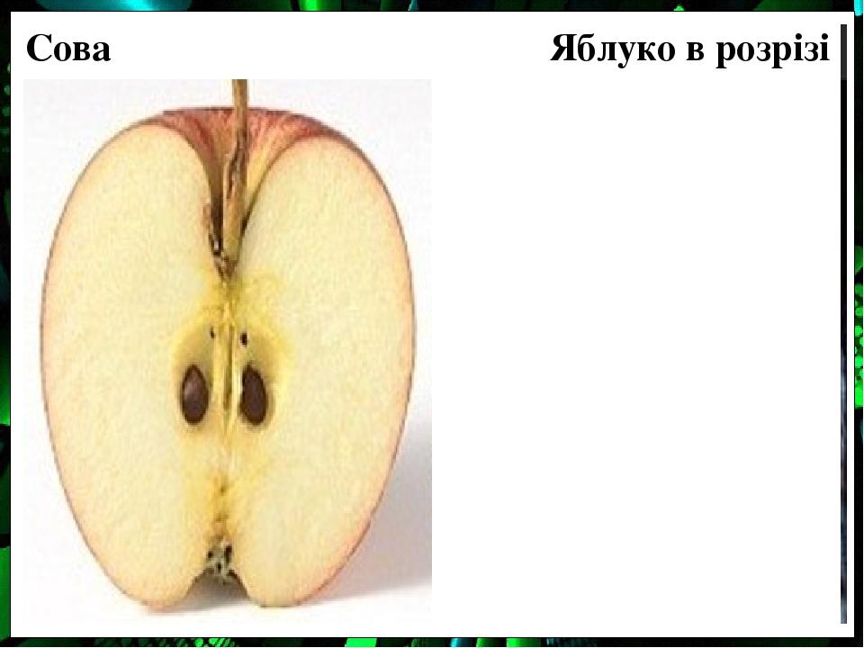 Сова Яблуко в розрізі