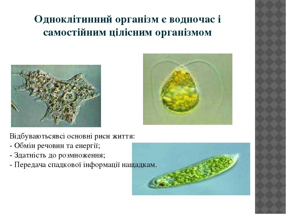 Одноклітинний організм є водночас і самостійним цілісним організмом Відбуваютьсявсі основні риси життя: - Обмін речовин та енергії; - Здатність до ...