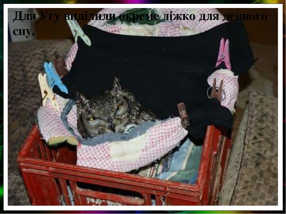 Для Угу виділили окреме ліжко для денного сну.