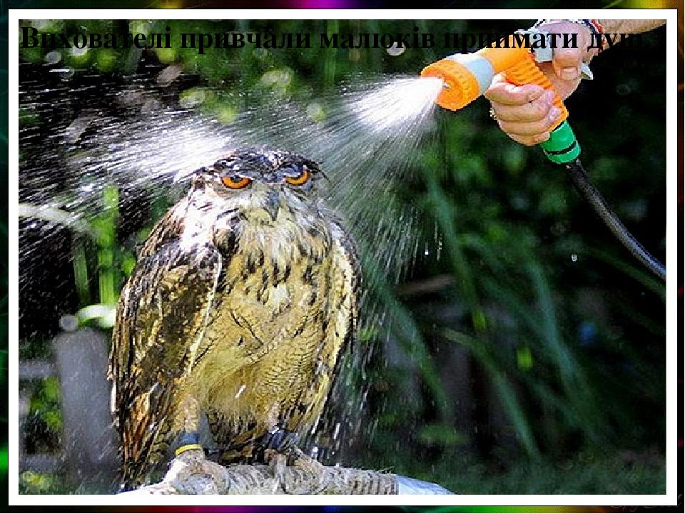 Вихователі привчали малюків приймати душ.
