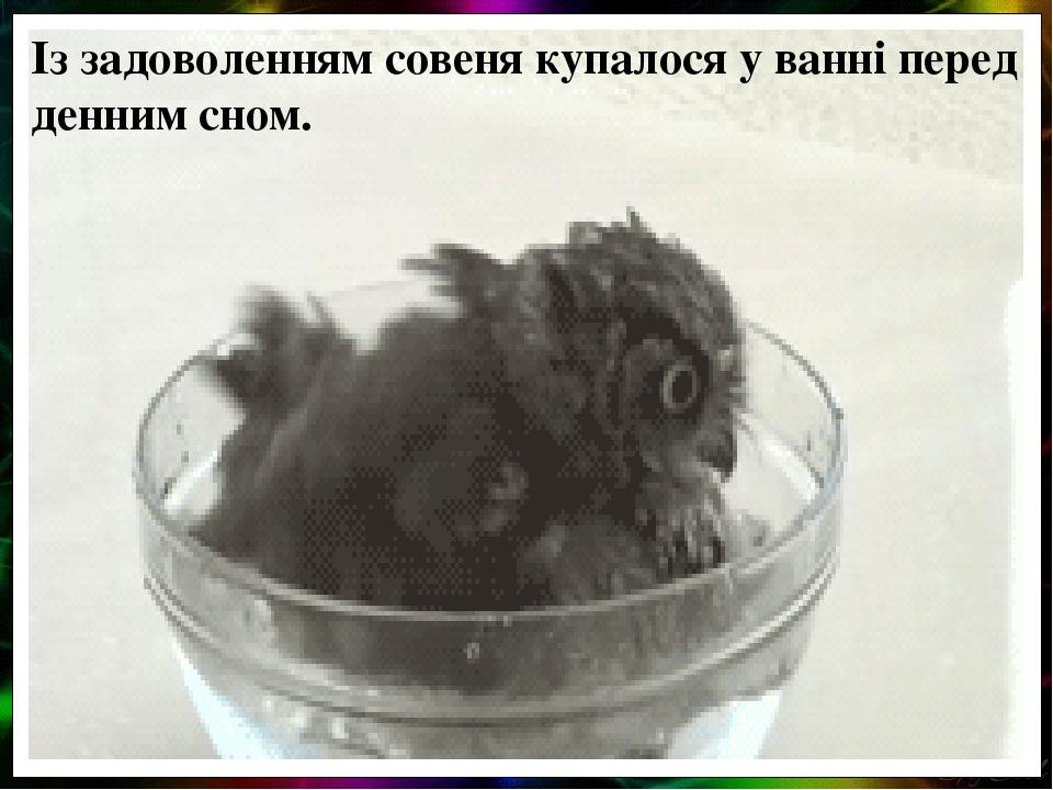 Із задоволенням совеня купалося у ванні перед денним сном.