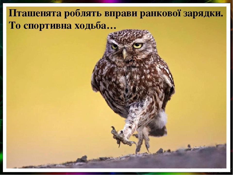 Пташенята роблять вправи ранкової зарядки. То спортивна ходьба…