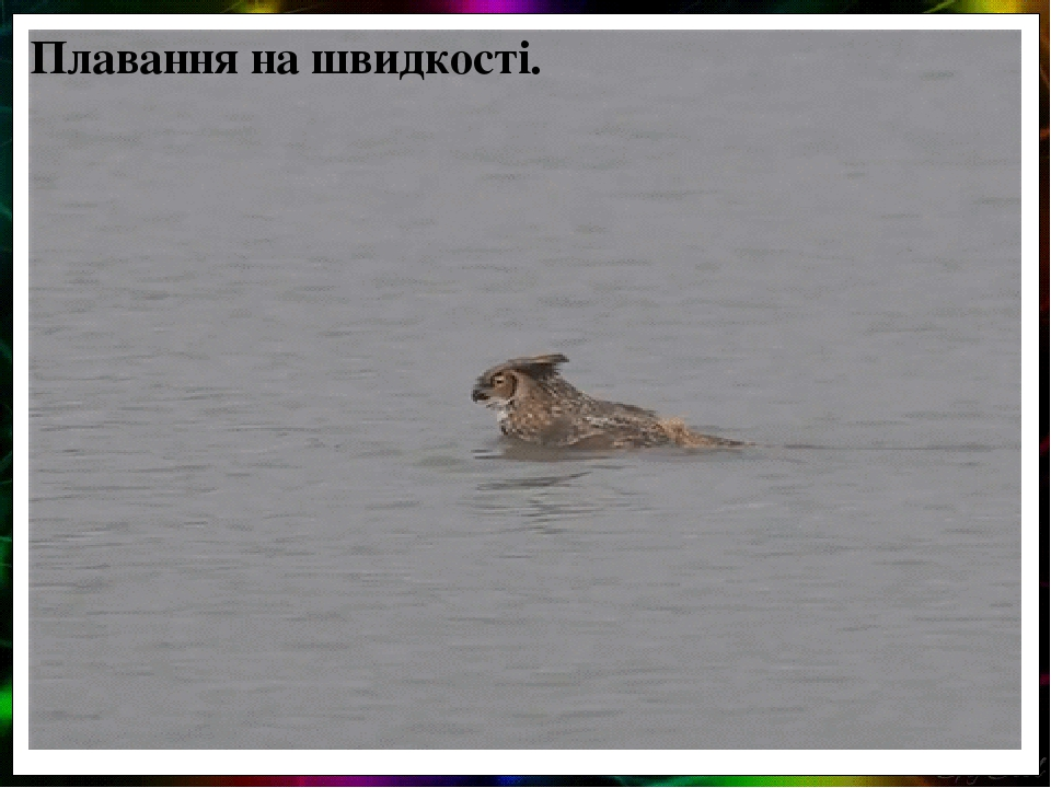 Плавання на швидкості.