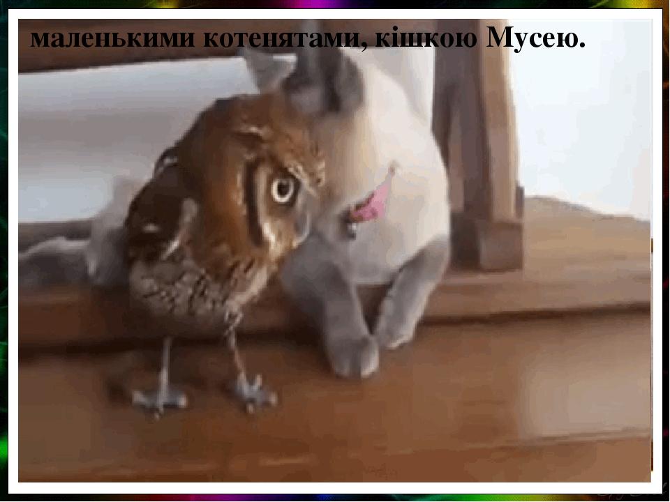 маленькими котенятами, кішкою Мусею.