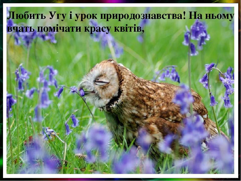 Любить Угу і урок природознавства! На ньому вчать помічати красу квітів,
