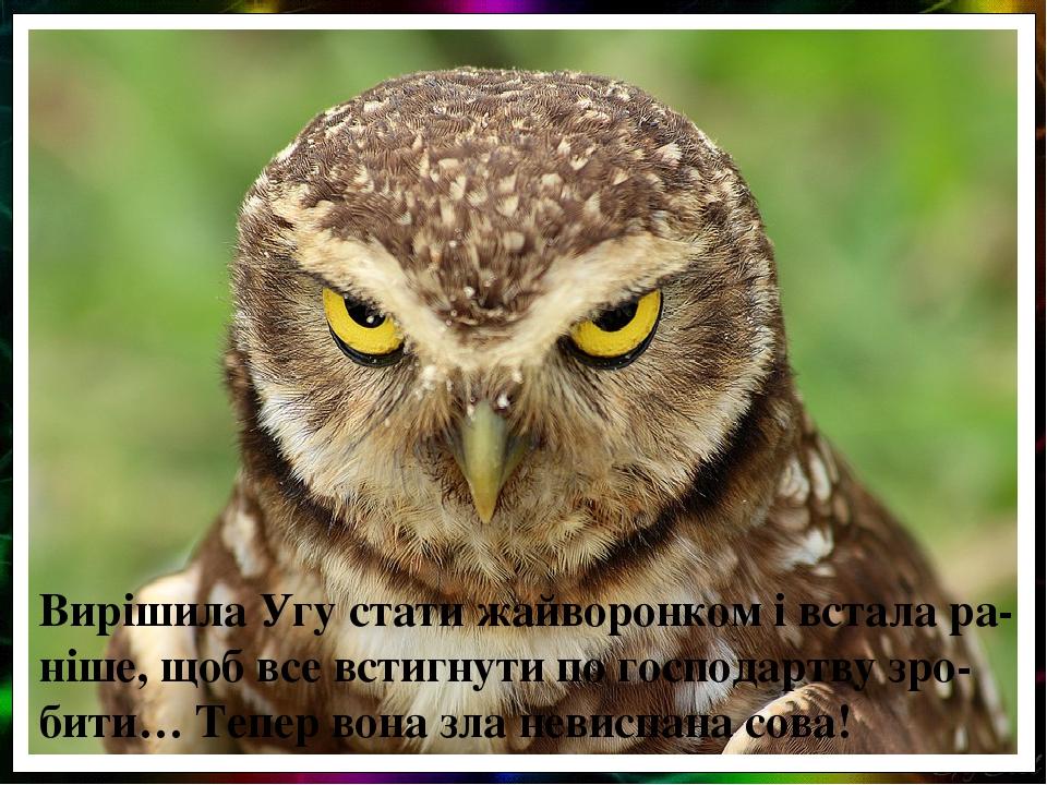 Вирішила Угу стати жайворонком і встала ра-ніше, щоб все встигнути по господартву зро-бити… Тепер вона зла невиспана сова!