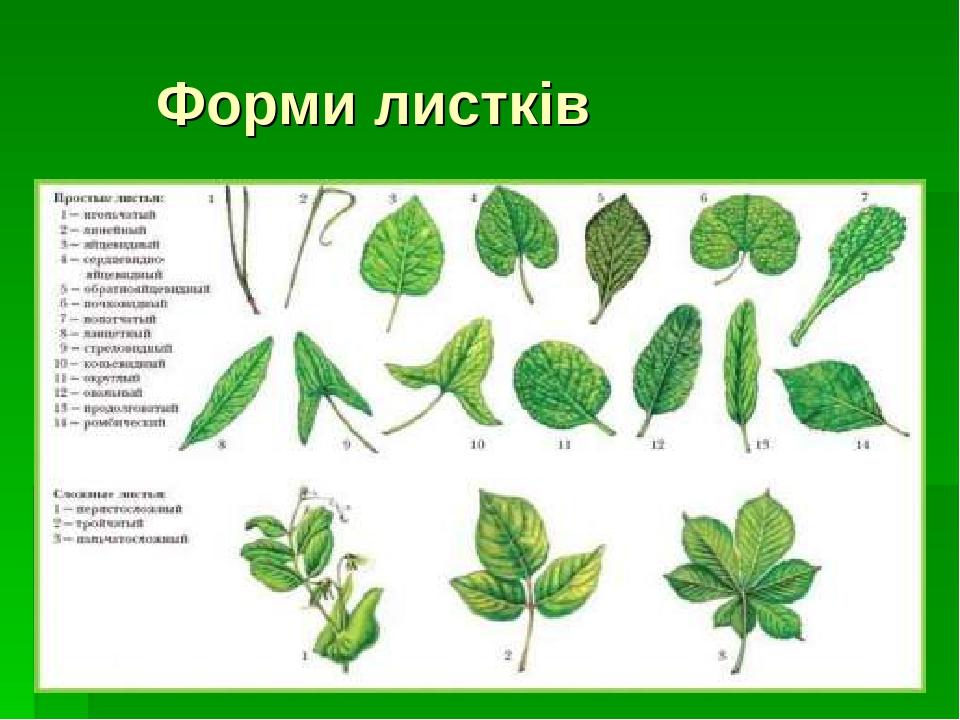 Форми листків