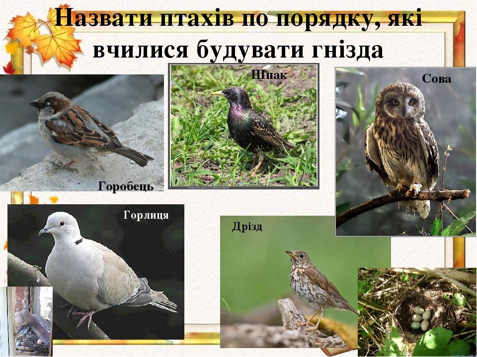 Назвати птахів по порядку, які вчилися будувати гнізда Дрізд Сова Шпак Горобець Горлиця