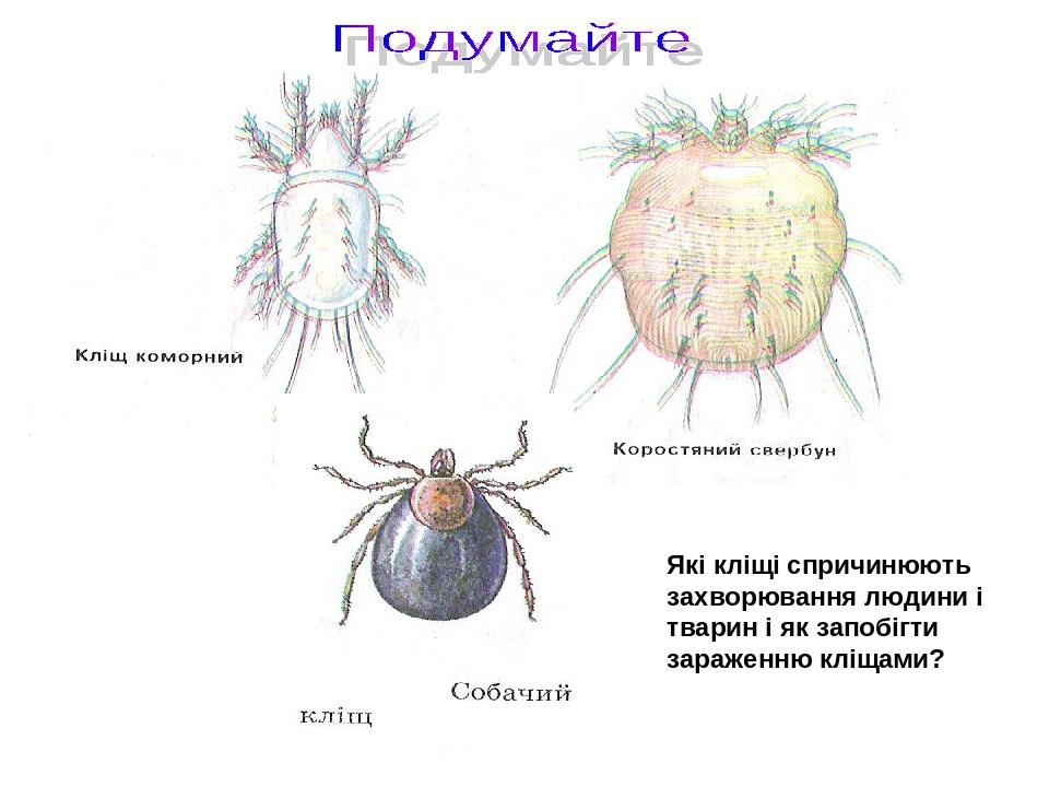 Які кліщі спричинюють захворювання людини і тварин і як запобігти зараженню кліщами?
