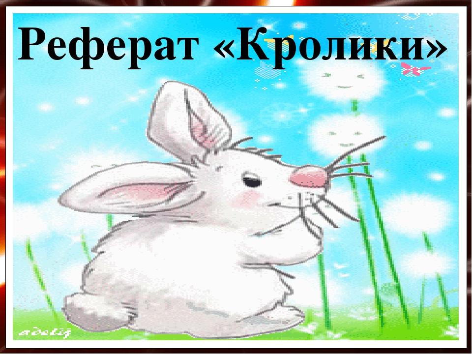Реферат «Кролики»