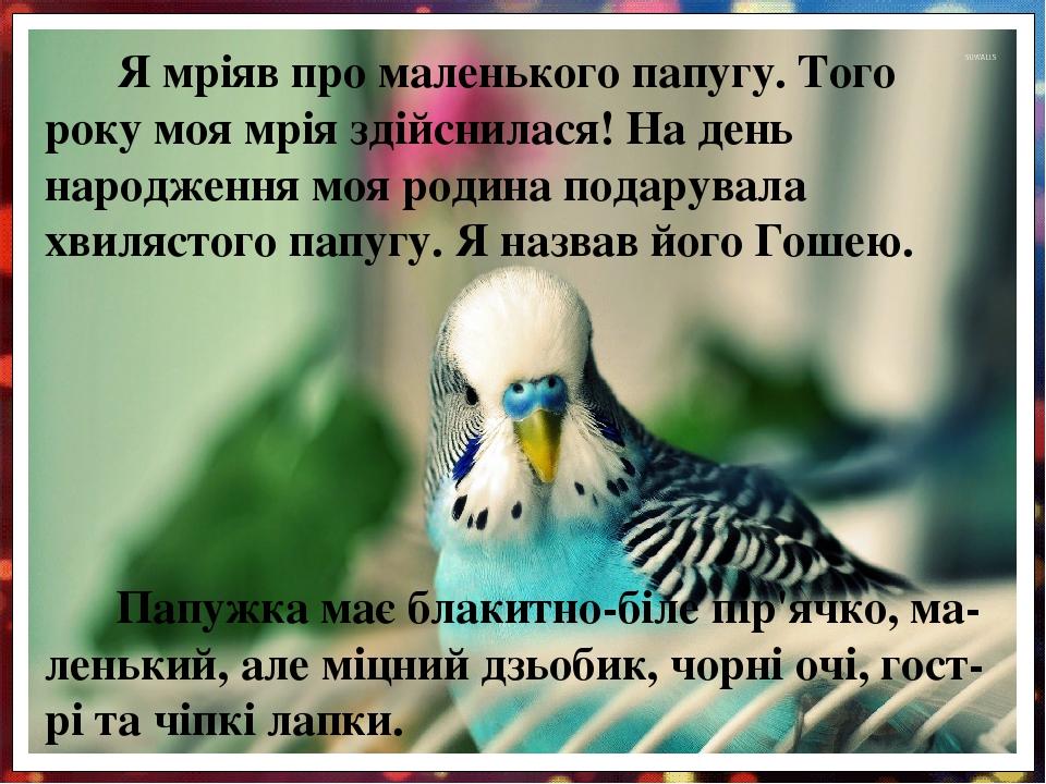 Папужка має блакитно-біле пір'ячко, ма-ленький, але міцний дзьобик, чорні очі, гост-рі та чіпкі лапки. Я мріяв про маленького папугу. Того року моя...