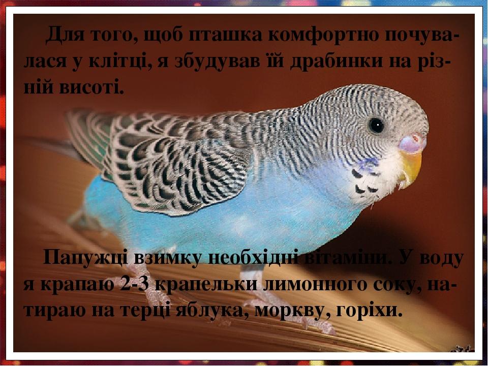 Для того, щоб пташка комфортно почува-лася у клітці, я збудував їй драбинки на різ-ній висоті. Папужці взимку необхідні вітаміни. У воду я крапаю 2...