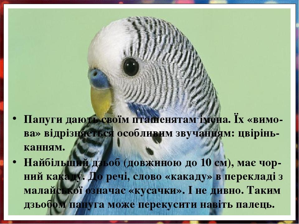 Папуги дають своїм пташенятам імена. Їх «вимо-ва» відрізняється особливим звучанням: цвірінь-канням. Найбільший дзьоб (довжиною до 10 см), має чор-...