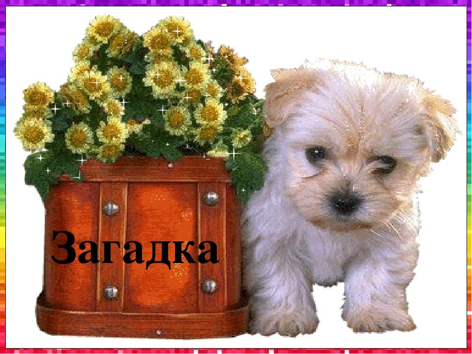 гифки щенки с цветами