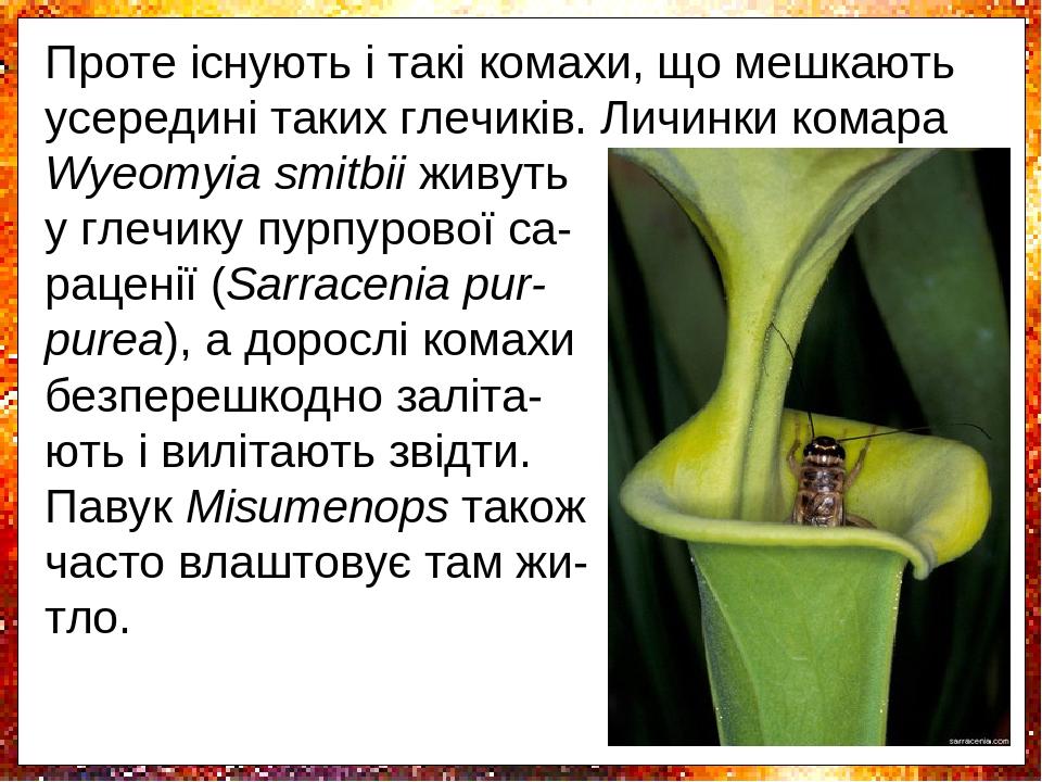 Сараценія належить до найбільших комахо-їдних рослин. Являє собою скручений лист, який утворює пастку. Догори рослини лист розширюється, утворюючи ...