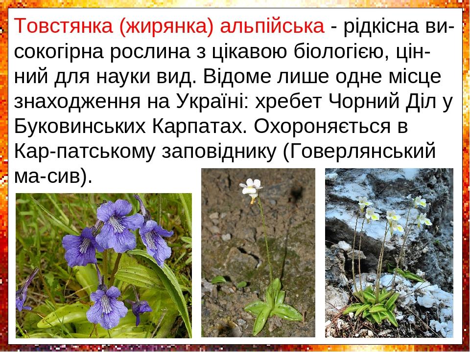 Товстянка (жирянка) альпійська - рідкісна ви-сокогірна рослина з цікавою біологією, цін-ний для науки вид. Відоме лише одне місце знаходження на Ук...