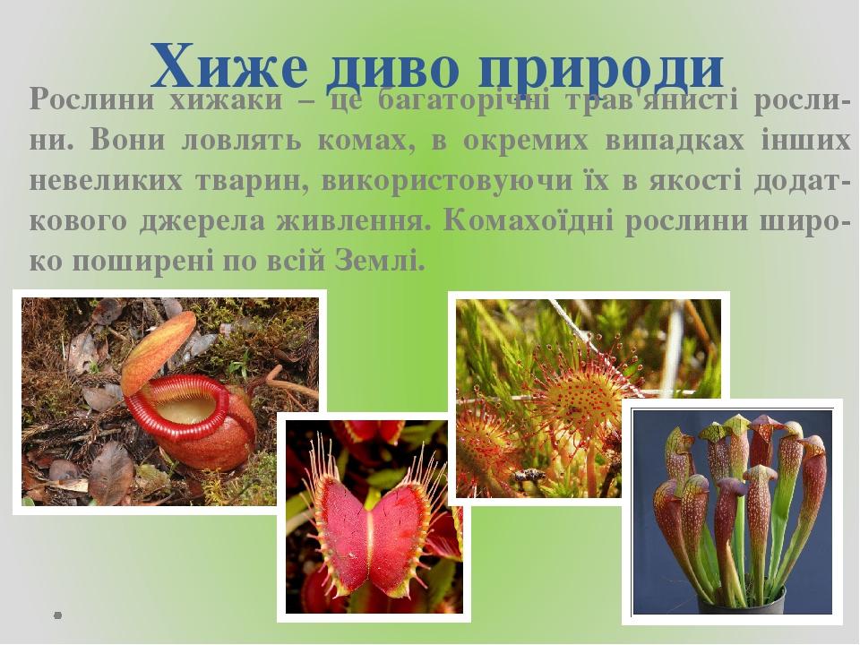 Хиже диво природи Рослини хижаки – це багаторічні трав'янисті росли-ни. Вони ловлять комах, в окремих випадках інших невеликих тварин, використовую...