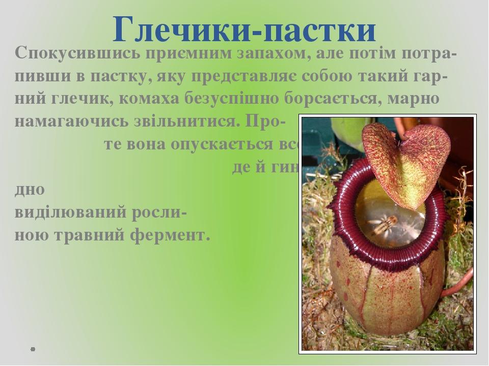 Глечики-пастки Спокусившись приємним запахом, але потім потра-пивши в пастку, яку представляє собою такий гар-ний глечик, комаха безуспішно борсаєт...