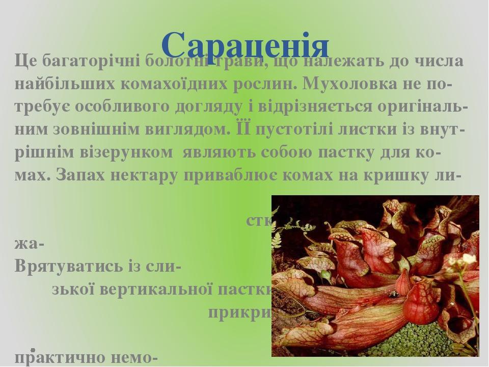 Сараценія Це багаторічні болотні трави, що належать до числа найбільших комахоїдних рослин. Мухоловка не по-требує особливого догляду і відрізняєть...