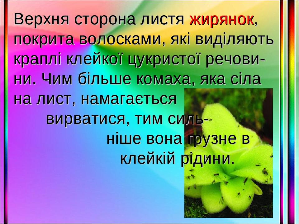 Верхня сторона листя жирянок, покрита волосками, які виділяють краплі клейкої цукристої речови-ни. Чим більше комаха, яка сіла на лист, намагається...