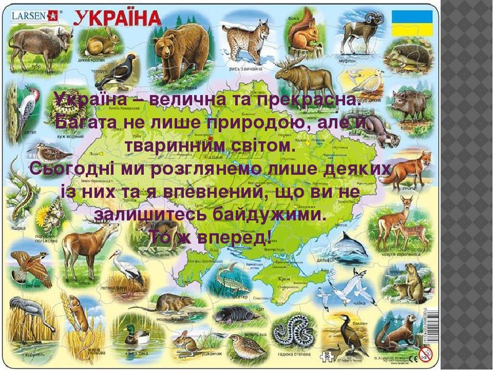 Україна – велична та прекрасна. Багата не лише природою, але й тваринним світом. Сьогодні ми розглянемо лише деяких із них та я впевнений, що ви не...