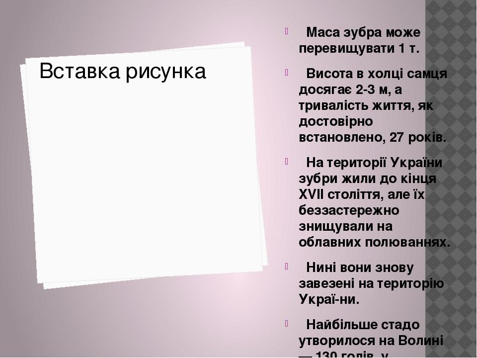 Маса зубра може перевищувати 1 т. Висота в холці самця досягає 2-3 м, а тривалість життя, як достовірно встановлено, 27 років. На території України...