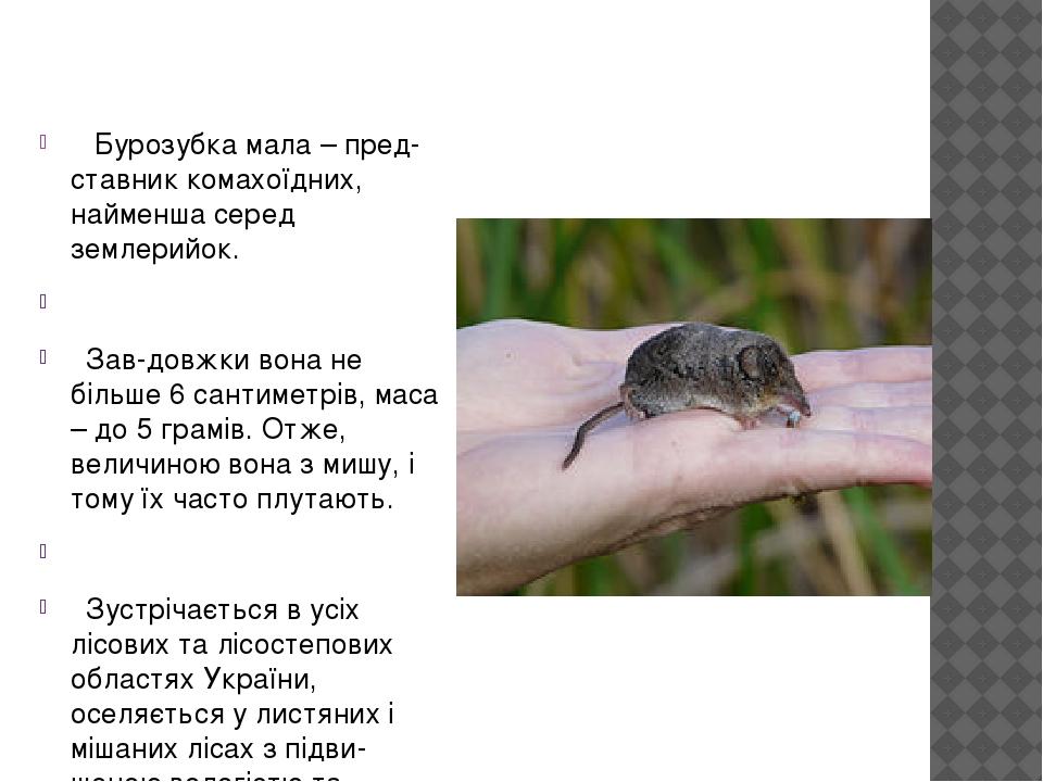 Бурозубка мала –представник комахоїдних, найменша серед землерийок. Завдовжки вона не більше 6 сантиметрів, маса –до 5 грамів. Отже, величиною ...