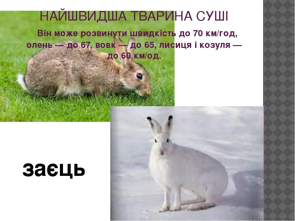НАЙШВИДША ТВАРИНА СУШІ Він може розвинути швидкість до 70 км/год, олень — до 67, вовк — до 65, лисиця і козуля — до 60 км/од. заєць