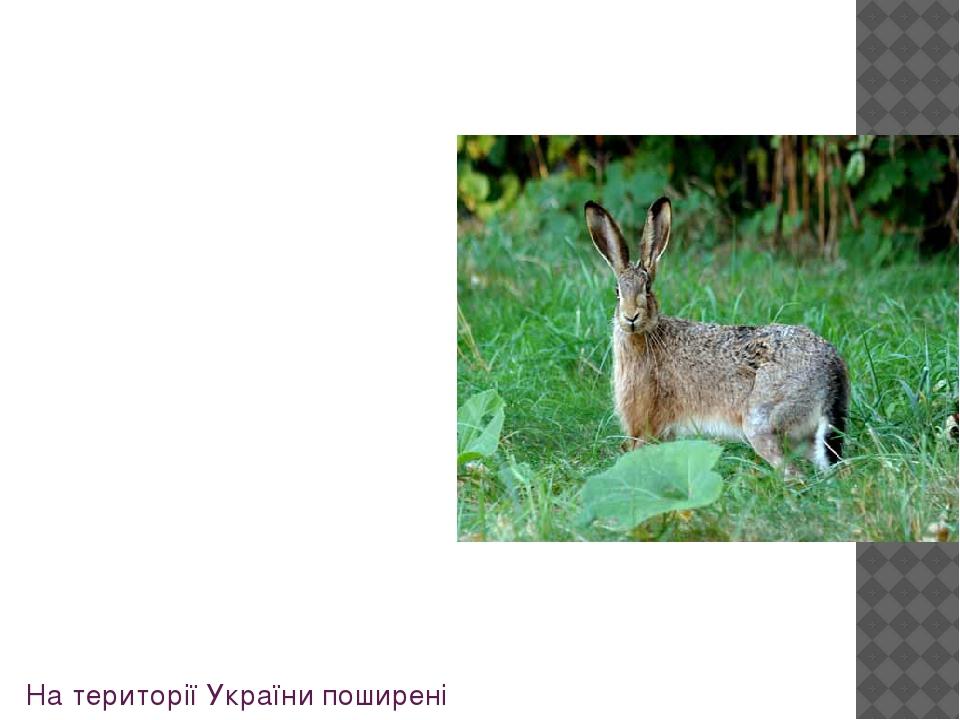 На територіїУкраїнипоширені два види: Заєць сірий, або русак чи звичайний, Заєць білий, або заєць - білик, або біляк - рідкісний в межах України....