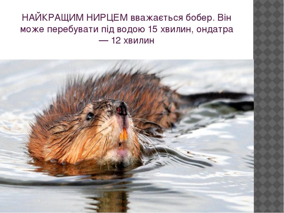 НАЙКРАЩИМ НИРЦЕМ вважається бобер. Він може перебувати під водою 15 хвилин, ондатра — 12 хвилин