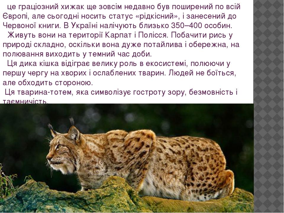 це граціозний хижак ще зовсім недавно був поширений по всій Європі, але сьогодні носить статус «рідкісний», і занесений до Червоної книги. В Україн...